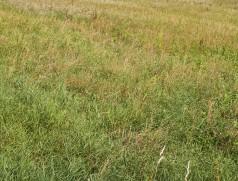 Nach wie vor kein seltenes Bild bei Soja-Direktsaat-Versuchen: Wo sind nur die Sojapflanzen? Foto: Taifun Tofuprodukte