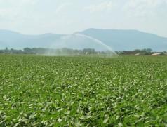 Hitze und Wasser im Hochsommer - so liebt es die Sojabohne. Trommelregner müssen jedoch besonders in der empfindlichen Blüte mit feinen Düsen ausgestattet sein. Foto: Taifun Tofuprodukte