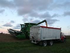 Sojaernte in Ontario: Hier werden vielfach die gleichen Reifegruppen angebaut wie in Deutschland. Entsprechend stammen viele unserer Sojasorten aus kanadischer Züchtung. Foto: Taifun Tofuprodukte