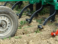 Dammkulturgerät mit Hackeinstellung im Einsatz. Foto: A. Grafen, Bioland