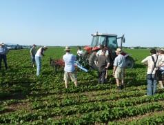 In Deutschland finden zu allen Themen des Sojaanbaus Feldtage statt. Foto: Taifun Tofuprodukte