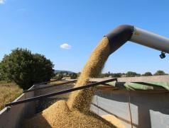 Sei es bei der Ernte oder bei der Aufbereitung: Sojabohnen sind empfindlich. Bereits nicht sichtbare Haarrisse in der Samenhülle beinträchtigen die Keim- und Lagerfähigkeit. Foto: Taifun Tofuprodukte