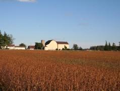 GVO Soja in Kanada. Dort werden vielfach GVO- und nicht-GVO-Bohnen in direkter Nachbarschaft angebaut. Dank der strengen Selbstbefruchtung der Sojablüten lassen sich Kontaminationen durch getrennte Erntemaschinen und sorgfältiges Arbeiten gut vermeiden. Foto: Taifun Tofuprodukte