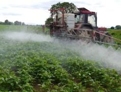Seltener Anblick: Soja ist eine sehr robuste Kultur. Selbst im konventionellen Anbau werden wenig Pestizide eingesetzt. Foto: Taifun Tofuprodukte